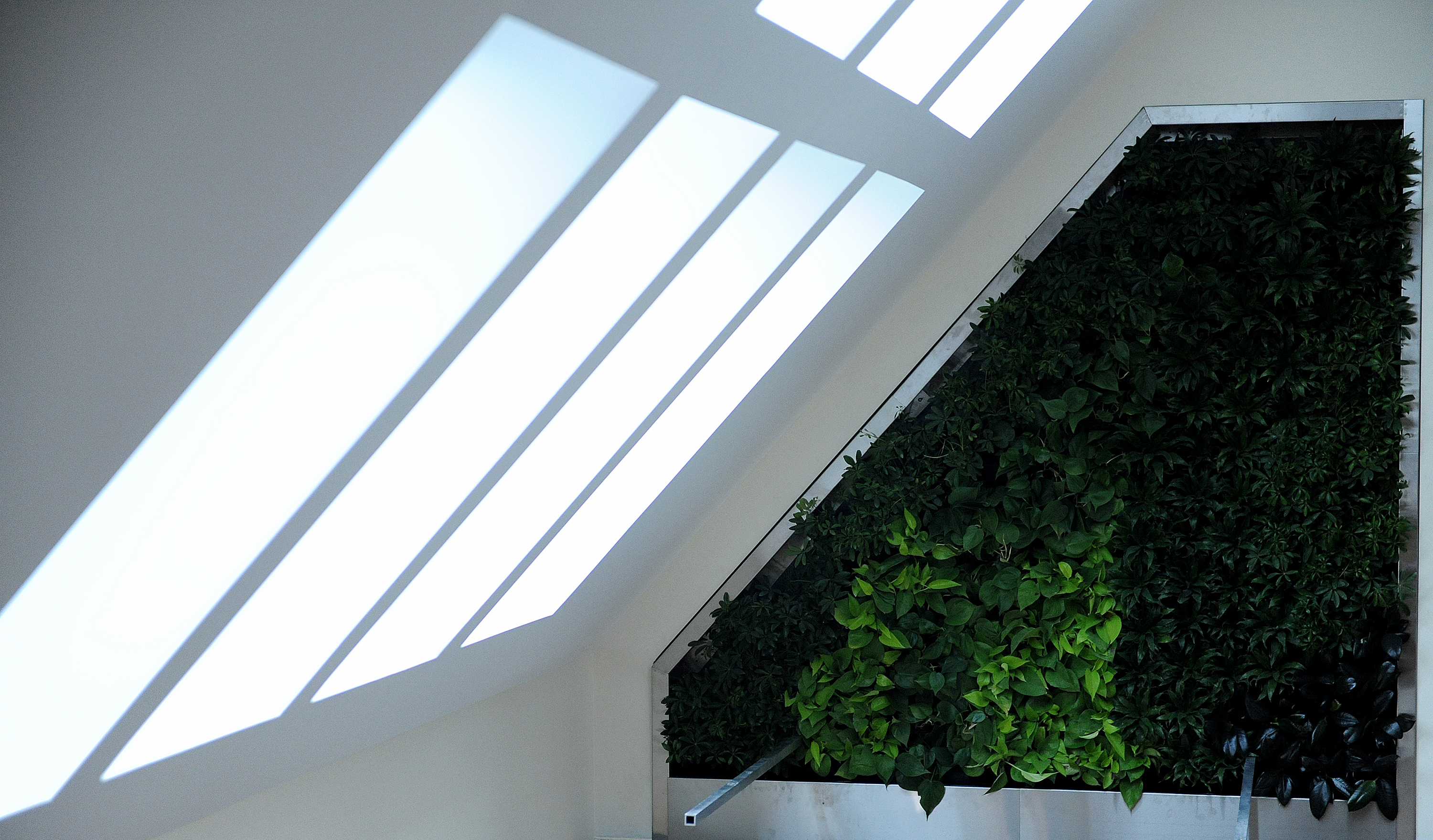 The living wall inside Hildreth-Mirza Hall at Bucknell University.